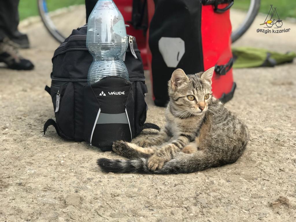 vaude-cat