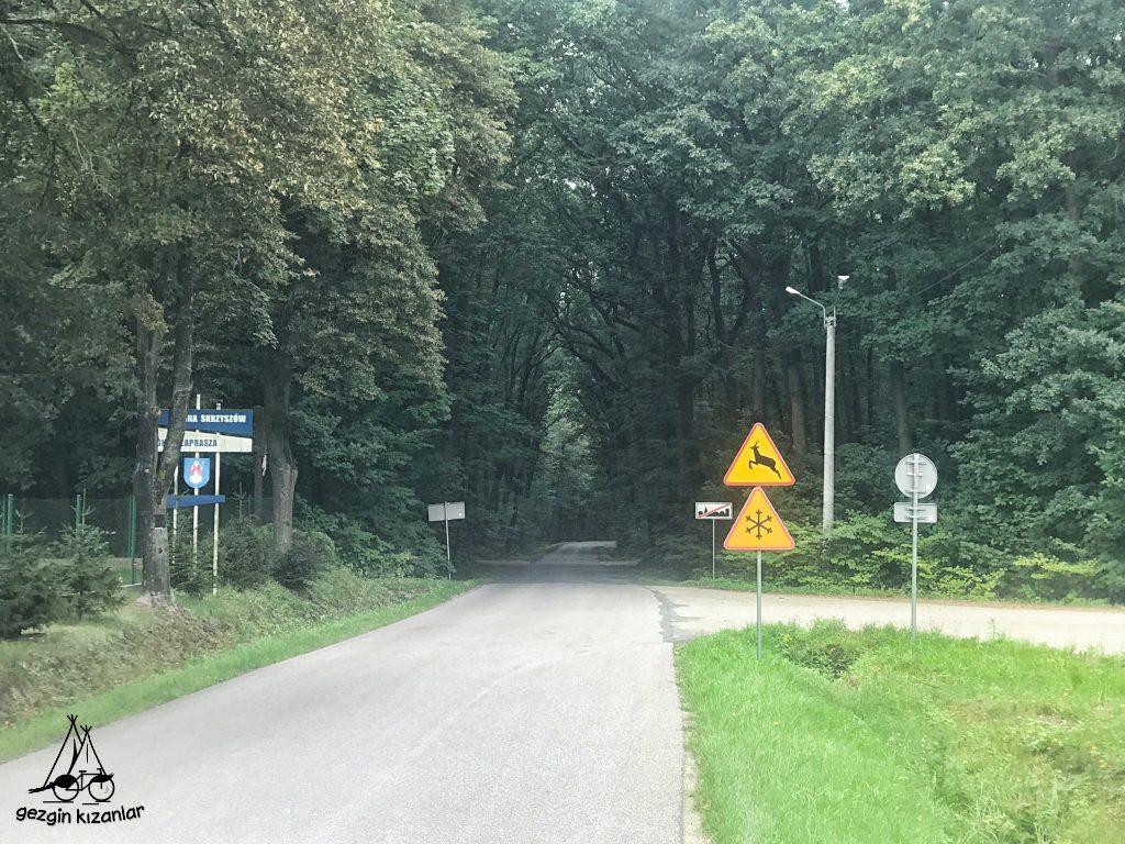 orman-yolu